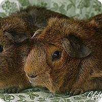 Adopt A Pet :: Cliff & Rocky - Santa Barbara, CA