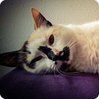 Adopt A Pet :: Cheyenne - Wilmington, NC
