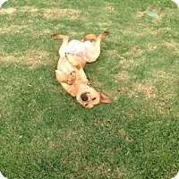 Adopt A Pet :: Eva (fostered in Maine) - Cranston, RI