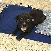 Adopt A Pet :: Ellis - Garden City, MI