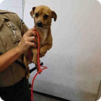 Adopt A Pet :: AUBURN - San Martin, CA