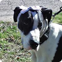Adopt A Pet :: Zoey - Baden, PA