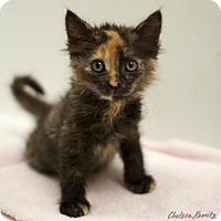 Adopt A Pet :: Andromeda - Los Angeles, CA