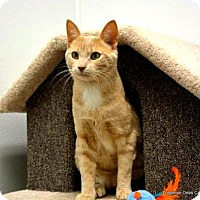 Adopt A Pet :: Stitch(Bonded to Jerome) - Richmond Hill, ON