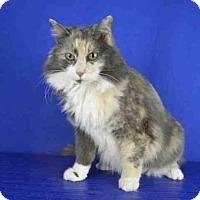 Adopt A Pet :: FREDA - Norman, OK