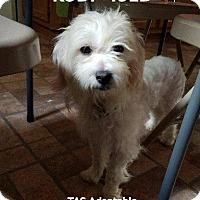 Adopt A Pet :: Kodi - Spring, TX