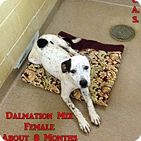 Adopt A Pet :: 1-6 - Triadelphia, WV