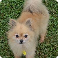 Adopt A Pet :: Scout - Prole, IA