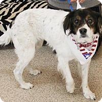 Adopt A Pet :: Samantha - Kennesaw, GA