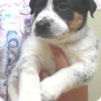Adopt A Pet :: Asher - Waupaca, WI