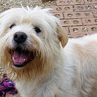 Adopt A Pet :: Oscar of Union - Spartanburg, SC