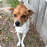 Adopt A Pet :: Milton - Portland, OR