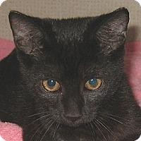 Adopt A Pet :: MALLIE-2012 - Hamilton, NJ