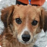 Adopt A Pet :: Huey*ADOPTED!* - Chicago, IL