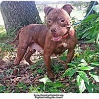 Adopt A Pet :: Reese - Eustis, FL