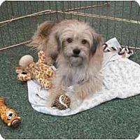 Adopt A Pet :: Benji - Fowler, CA