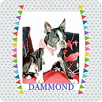 Adopt A Pet :: Dammond - Alabaster, AL