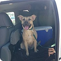 Adopt A Pet :: BABY - Calgary, AB