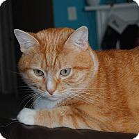 Adopt A Pet :: Simba - Palmdale, CA