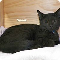 Adopt A Pet :: Spook - Dover, OH