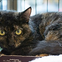 Adopt A Pet :: Aloisia - New York, NY