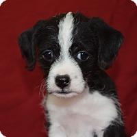 Adopt A Pet :: ROSE - MILWAUKEE, WI