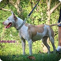 Adopt A Pet :: Brianna - Daleville, AL