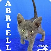 Adopt A Pet :: Gabrielle - Carencro, LA