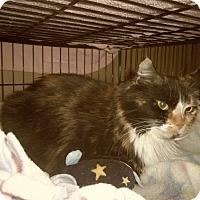 Adopt A Pet :: CALLIE - Medford, WI