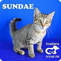Adopt A Pet :: Sundae - Carencro, LA