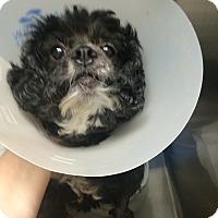 Adopt A Pet :: Minnie - Oak Ridge, NJ