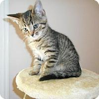 Adopt A Pet :: George - Richmond Hill, ON