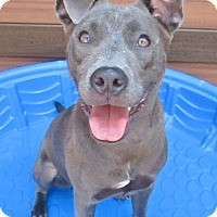 Adopt A Pet :: Hayes - 1 year old - Charleston, SC