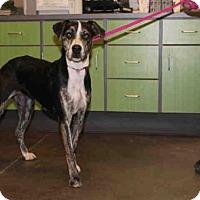 Adopt A Pet :: A024497 - Norman, OK