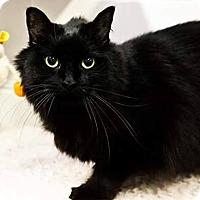 Adopt A Pet :: Lovey - Kenai, AK