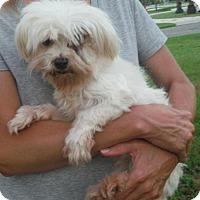 Adopt A Pet :: Beth Ann Pending - Manchester, NH