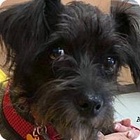 Adopt A Pet :: Esme - Conroe, TX