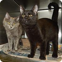 Adopt A Pet :: Zachery & Gerald - Newport, NC