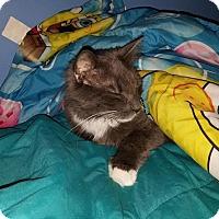 Adopt A Pet :: Ashes - Acushnet, MA