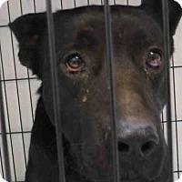 Adopt A Pet :: MERCURY - Ukiah, CA