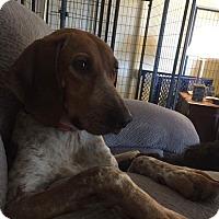 Adopt A Pet :: Lucy Lu - Dayton, OH