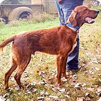 Adopt A Pet :: Todd - Palmyra, NE