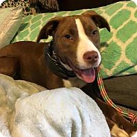 Adopt A Pet :: Red - Macon, GA