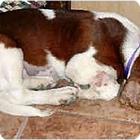 Adopt A Pet :: Alfie - Phoenix, AZ