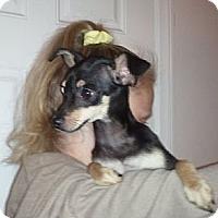Adopt A Pet :: Rambo - Encinitas, CA