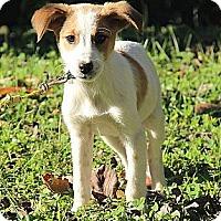 Adopt A Pet :: Norah - Brattleboro, VT
