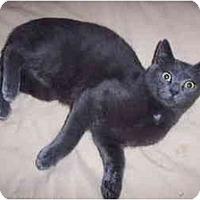 Adopt A Pet :: Ashton - Portland, ME
