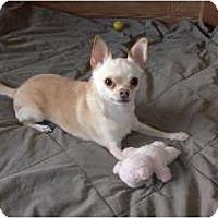 Adopt A Pet :: Simon - Only $45 adoption fee! - Litchfield Park, AZ