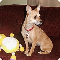Adopt A Pet :: Brandi - Mooy, AL