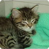 Adopt A Pet :: Pippy - Pascoag, RI